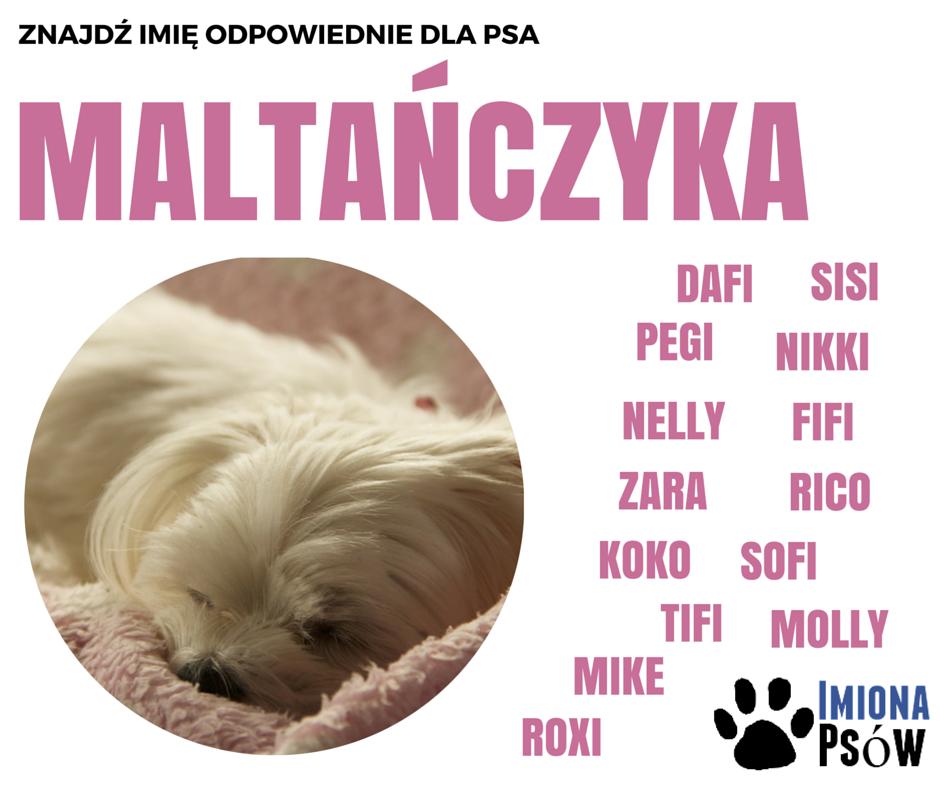imiona dla psów maltańczyk