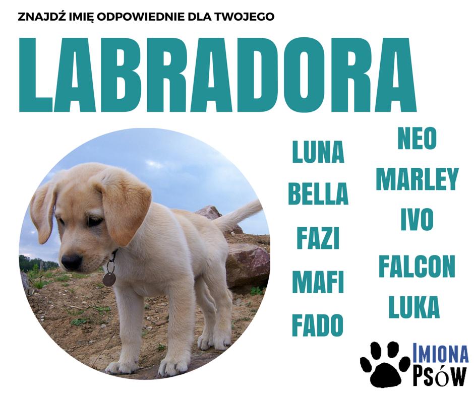 imię dla psa labradora