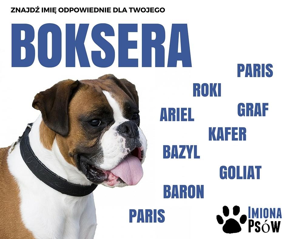 imiona dla psów bokser