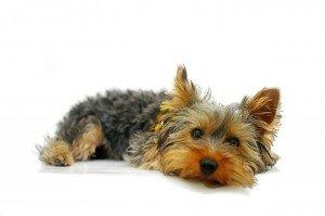 najpopularniejsze imiona dla psów