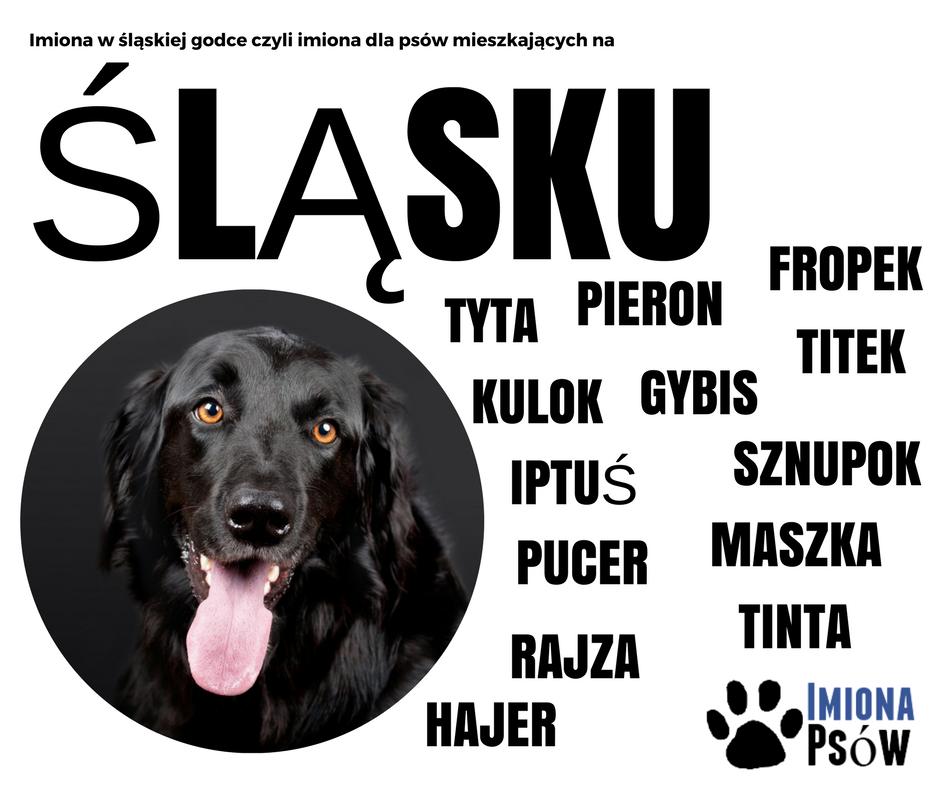imiona dla psów po śląsku